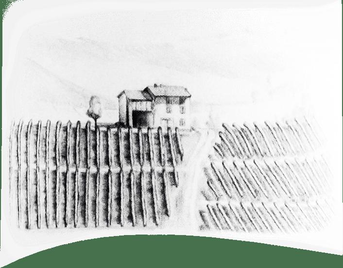 Vini dei Colli Piacentini - Rossi Terre di Cuccagna